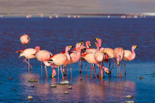 Reserva nacional de fauna andina Eduardo Avaroa (Bolivia)