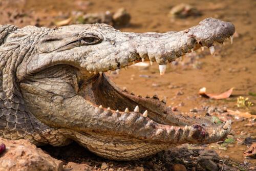 Reserva natural de Bandia en Senegal