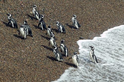 5 reservas de fauna sudamericanas