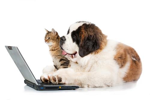 Riesgos de las redes sociales para tu mascota