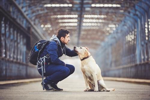 5 espectaculares rutas para disfrutar de los Estados Unidos con tu perro