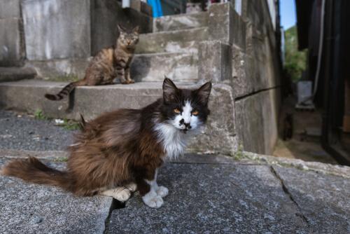 Tashirojima: isla de los gatos
