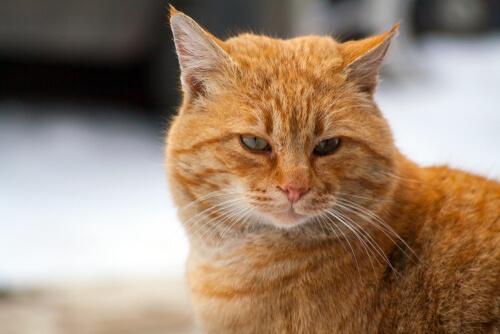 Un gato callejero llamado Bob: película