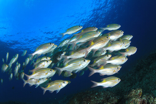 Vejiga natatoria en peces: para qué sirve