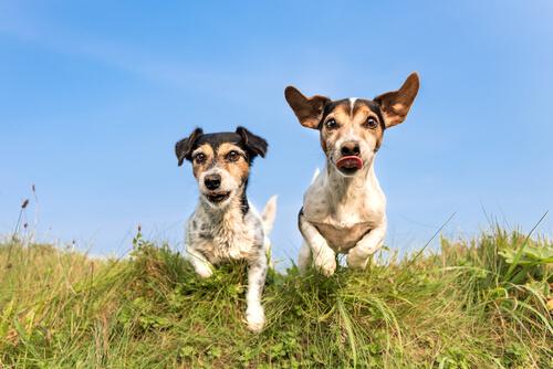 Ventajas de pasear a tu perro