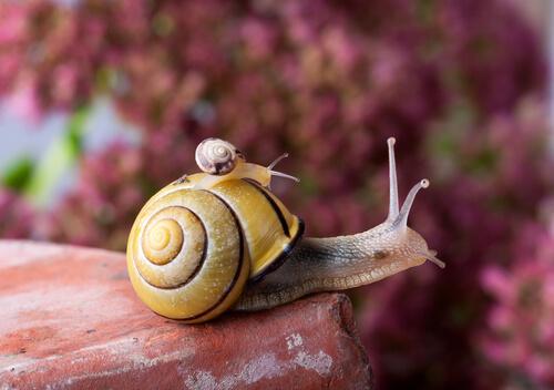 La vida del caracol: con la casa encima