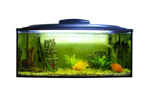 Consejos para tu acuario en verano