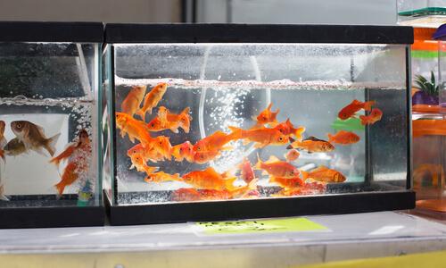 Acuario de peces: características