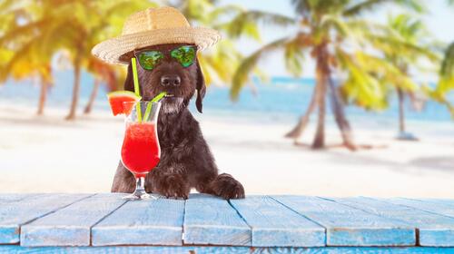 Alimentación de los perros en verano