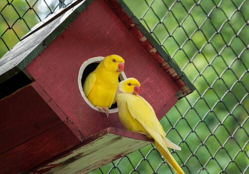 5 animales de color amarillo