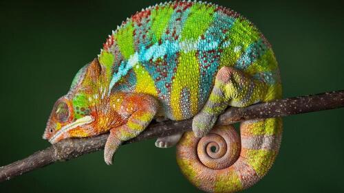 Animales que pueden cambiar de color