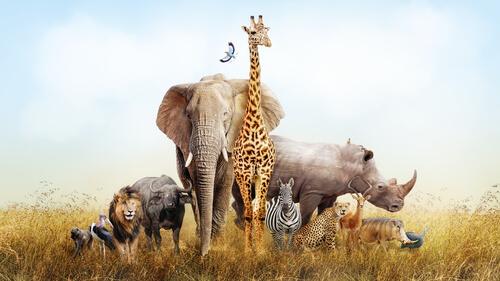 Los animales que se pueden ver en África