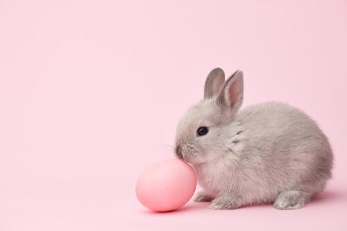 Apodo: conejo