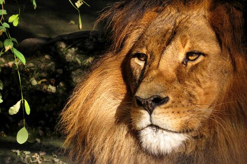 Aslan: Las crónicas de Narnia
