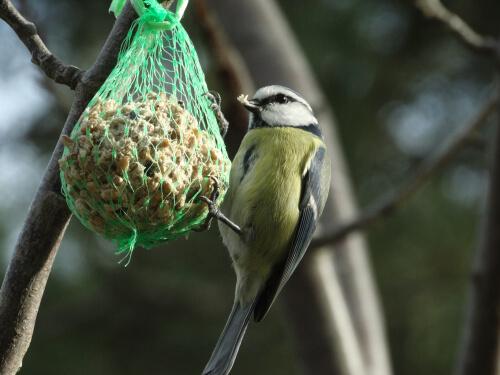 Atraer aves al jardín