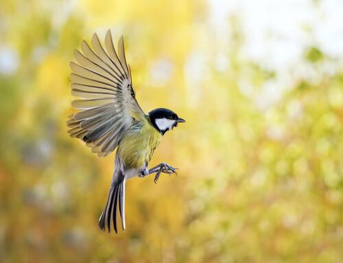 Cómo atraer pájaros a tu jardín