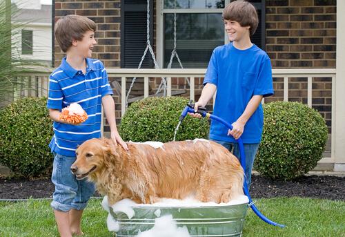 Consejos para bañar a tu perro con manguera