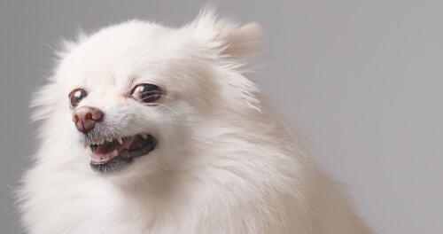 Caída de dientes en perros