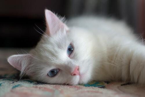 5 canciones dedicadas a las mascotas