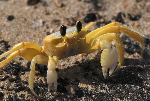 4 especies de cangrejos marinos