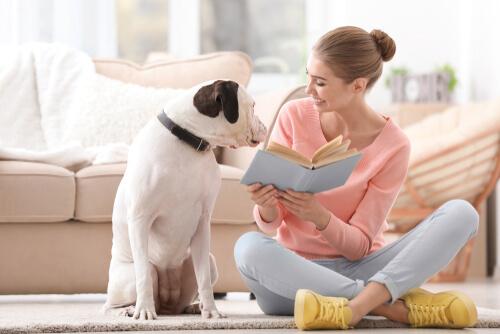 Casa de acogida para perros