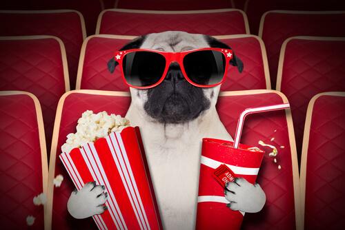 Salas de cine para perros