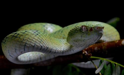 ¿Cuál puede ser el animal más letal del mundo?