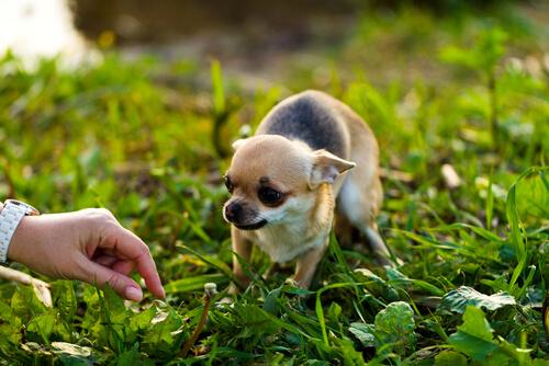 Nuestros consejos para acercarse a un perro miedoso