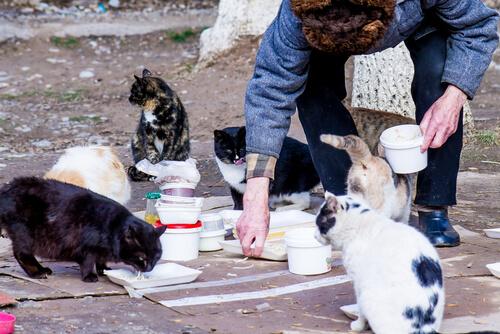 Cómo ayudar a gatos callejeros