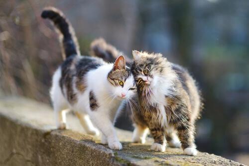 Cómo limpiar gato callejero