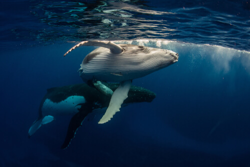 Cómo se relacionan las ballenas