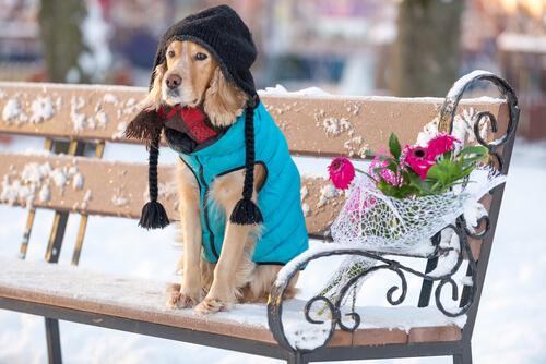 Consecuencias de la hipotermia en perros
