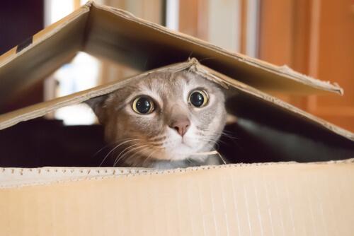 Control de natalidad en gatos