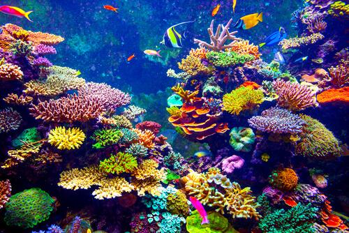 ¿Los corales son animales?