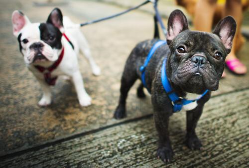 6 советов, когда дело доходит до выгула собак