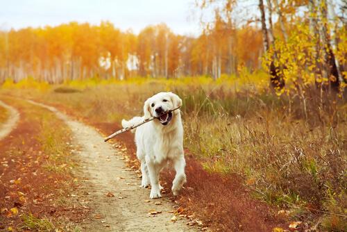 Cuándo pasear al perro: antes o después de comer