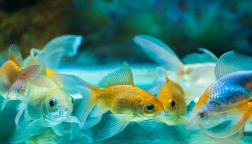 Los cuidados básicos de los peces