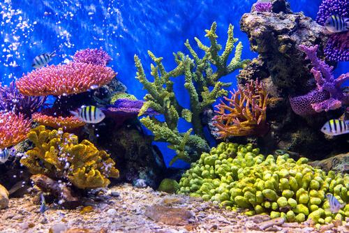 Cuidados de tu acuario si te vas de vacaciones