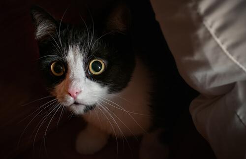 El mito de la curiosidad de los gatos