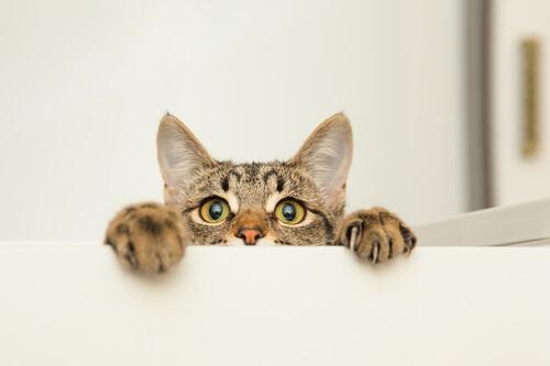 Curiosidad en los gatos