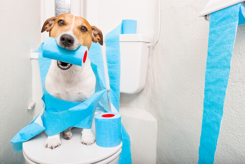Diarrea en perros mayores: cómo actuar