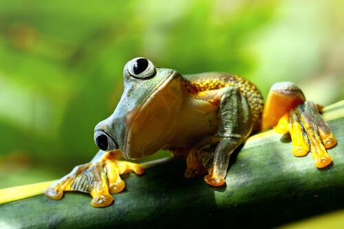 Las diferencias entre sapos y ranas