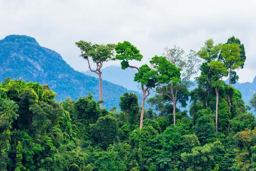 Los 5 principales ecosistemas del mundo
