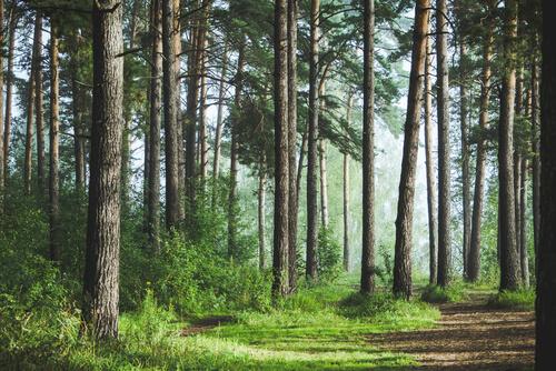 Ecosistema del bosque