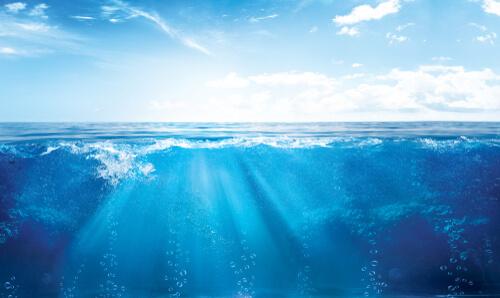 Ecosistema del mar