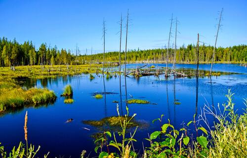 Ecosistema del pantano