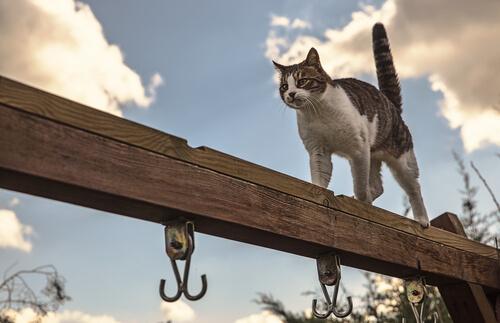 Equilibrio de los gatos