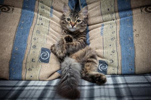 Evita que tu gato suba al sofá
