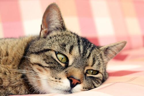 Evitar un golpe de calor en gatos