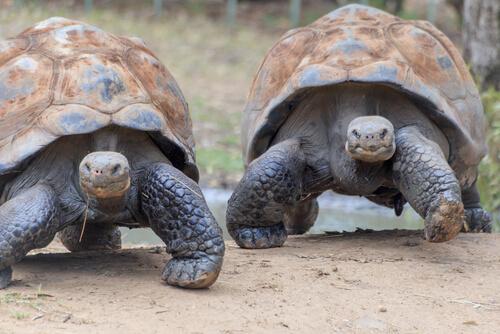 La fauna de las Islas Galápagos